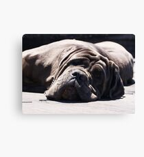 Dozy Days Canvas Print