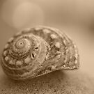 a shell on a rock by Clare Colins