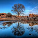 Rock Wall Tree Reflect by Bob Larson
