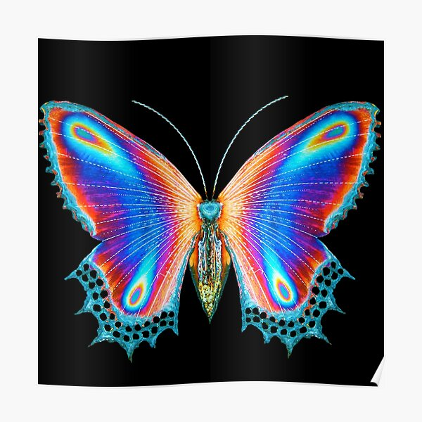 Multicolor Butterfly  Poster