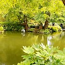 Peaceful gardens by eyes4nature