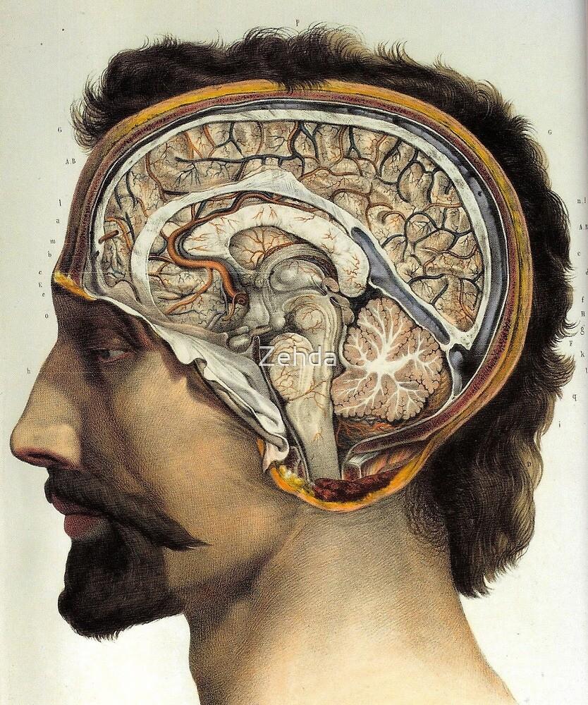 Look Inside My Brain Anatomical Brain by Zehda
