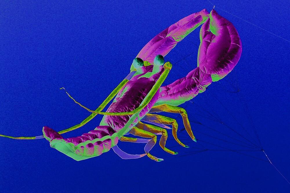 Solar Lobster Kite by jayded