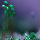 In a tiny world. by HelenaBrophy