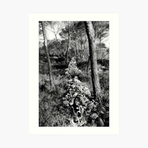 Free Forest Art Print