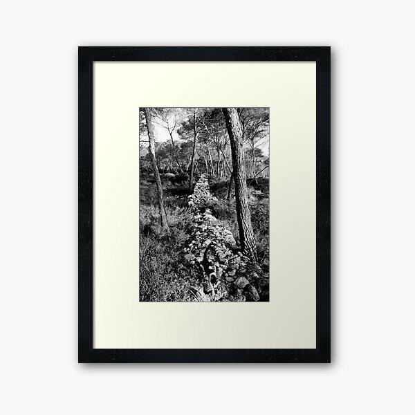 Free Forest Framed Art Print