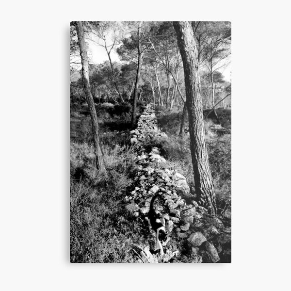 Free Forest Metal Print