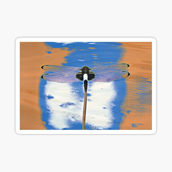 Digitally Enhanced Pied Skimmer Dragonfly Sticker