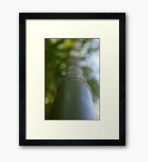 Bamboo up Framed Print