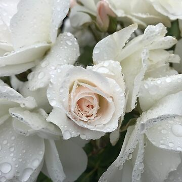 White roses in the rain by GreenNote