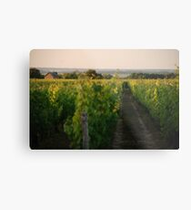 Through the Vineyards Metal Print