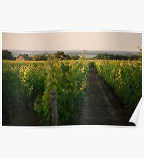 Through the Vineyards Poster