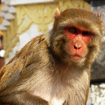 Mean-looking monkey staring by adng