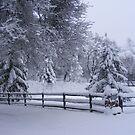 Winter Wonderland by NancyC