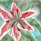 Star Gazer Lily by linmarie
