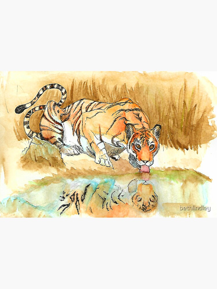A Tiger Having a Drink by bethlindley