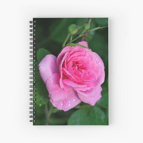 Gertrude Jekyll Rose Spiral Notebook