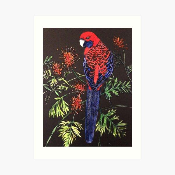 Crimson Rosella Art Print