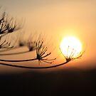 Autumn sunset by FraserJ