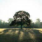 Morning tree by FraserJ
