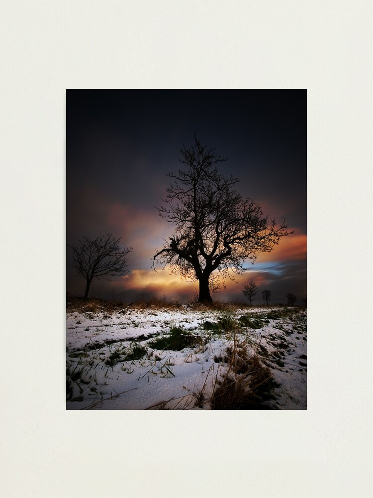 Alternate view of Christmas Trees Photographic Print