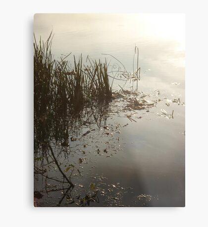 Reeds on Econfina Metal Print