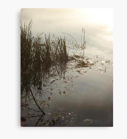 Reeds on Econfina Canvas Print