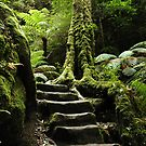 Old Stone Steps - Blue Mountains,NSW by Dilshara Hill