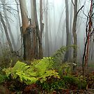 Mountain Mist at Shipley - Blue Mountains,NSW by Dilshara Hill