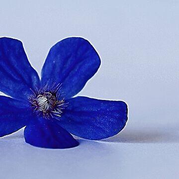 Fallen blue by Mortimer123