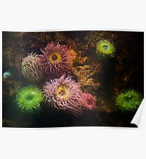 A Sea of Colors - Colorful Soft Coral Poster