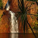 Wangi Falls - Litchfield National Park, NT by Dilshara Hill