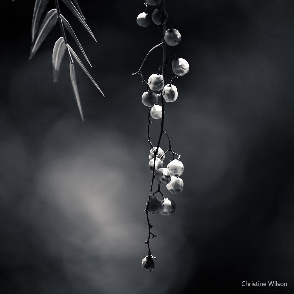 Quiet Suspension by Christine Wilson
