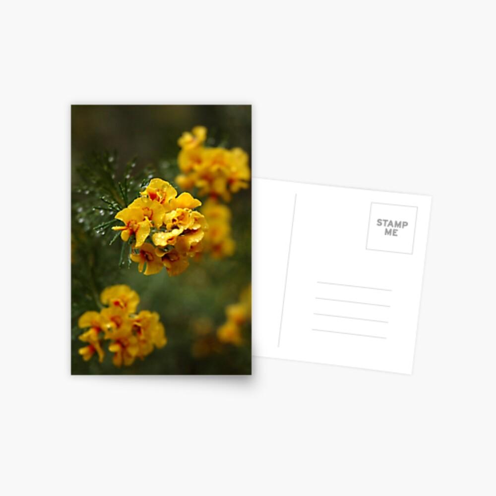 """""""Egg and Bacon Flower"""" (Dillwynia retorta) Postcard"""