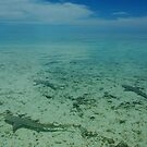 Sharks in shallow water - Heron Island, QLD by Dilshara Hill