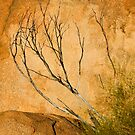 Rock Textures - Devil's Marbles Conservation Reserve by Dilshara Hill
