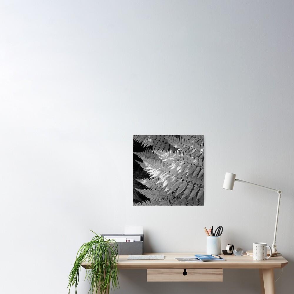 Ferns in dappled light Poster