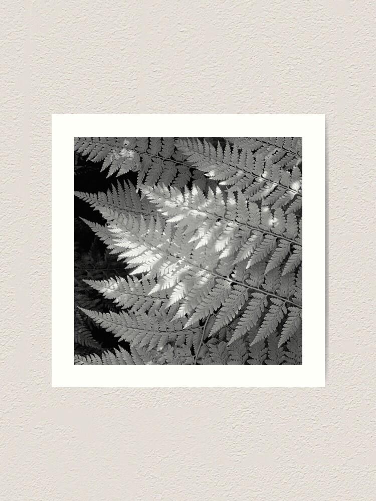 Alternate view of Ferns in dappled light Art Print