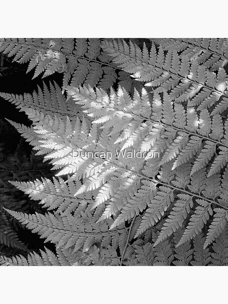 Ferns in dappled light by DuncanW