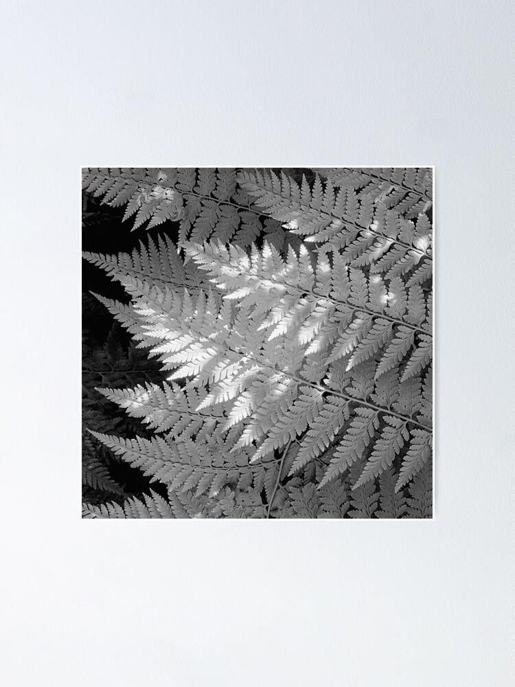 Alternate view of Ferns in dappled light Poster