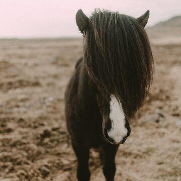 Icelandic Horse by adventurlings