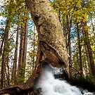 White Water Tree by BGSPhoto