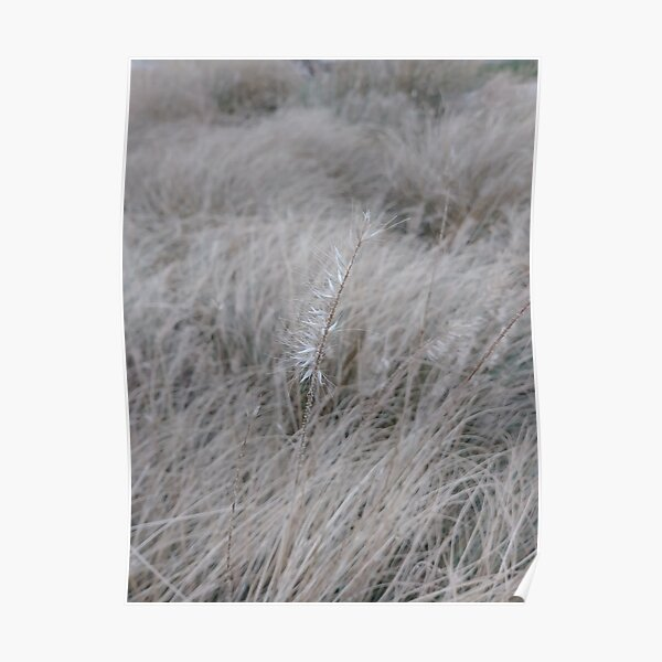 #Grass, #Stamford, #StamfordCity, #winter, #nature, #snow, #frost, #outdoors, #icee #cold, #wood, #season, #bird, #tree, #frozen, #dry, #garden, #grass, #weather, #horizontal, #colorimage, #nopeople Poster