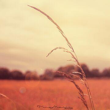 Evening Breeze by Tina-Maria