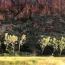 Sunlit trees, Glen Helen Gorge by Roz McQuillan