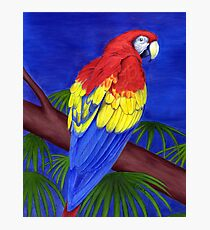 Scarlet Red Macaw (Ara macao) Photographic Print
