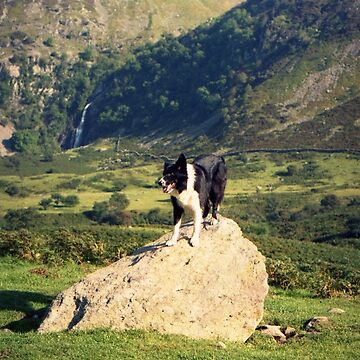 Young Indy at Aber Falls by mhhaslam
