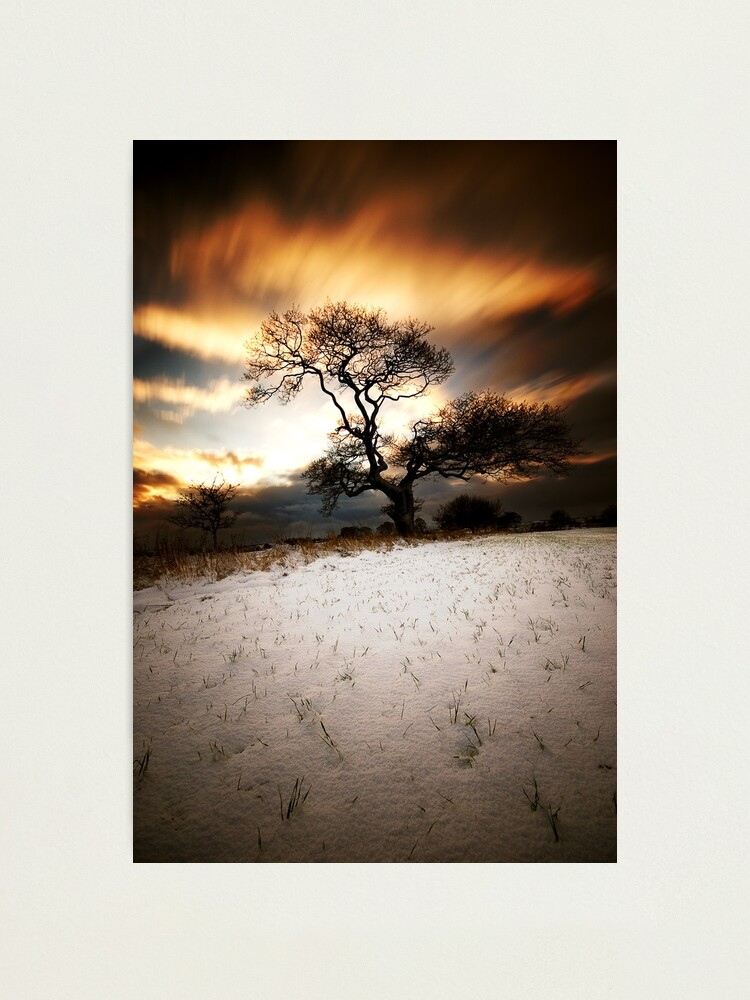 Alternate view of Magical tree Photographic Print
