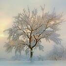 Snowy dream by i l d i    l a z a r