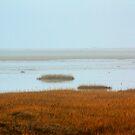 costal wetlands by FraserJ